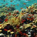 red-sea-egypt-diving-destination