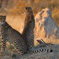 Moremi-Game-Reserve-botswana