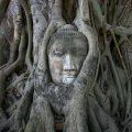 Wat-Phra-Mahatat-Buddha-Head-thailand