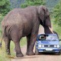 kruger_national_park-south-africa