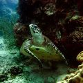 Diving-Courses-Koh-Tao-Turtle-Island