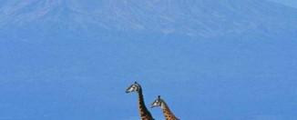 Mount Kilimanjaro, Tanzania Wildlife