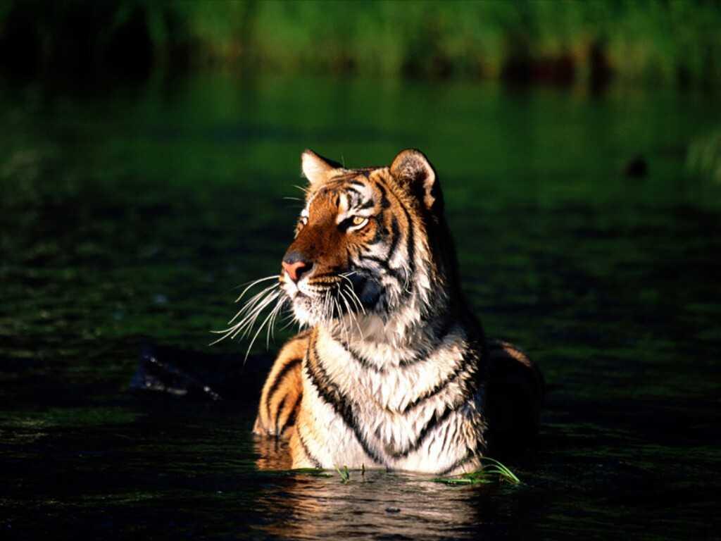 Sundarbans, India, Bangladesh